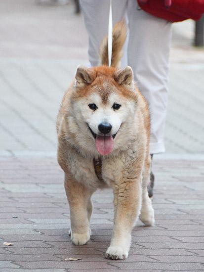 太郎のじいちゃんゴン