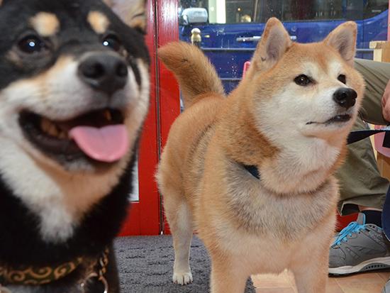 ごろたろう犬具来店写真