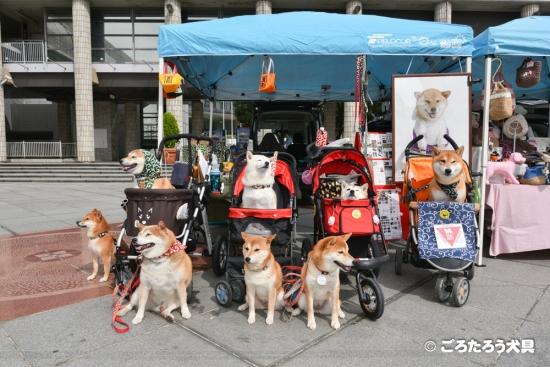 神戸わんわんマルシェごろたろう犬具ブース