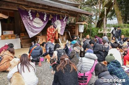 吉水神社犬初詣