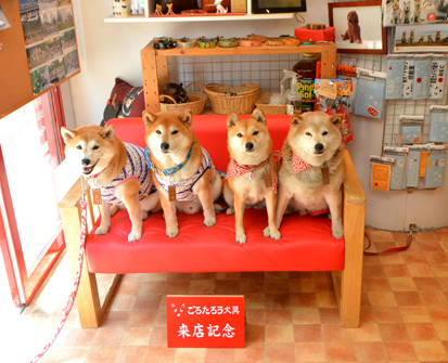 柴犬 リキユリ