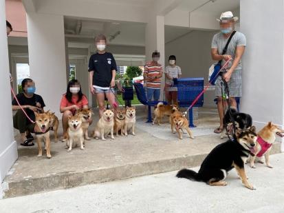 シンガポールの柴犬飼い