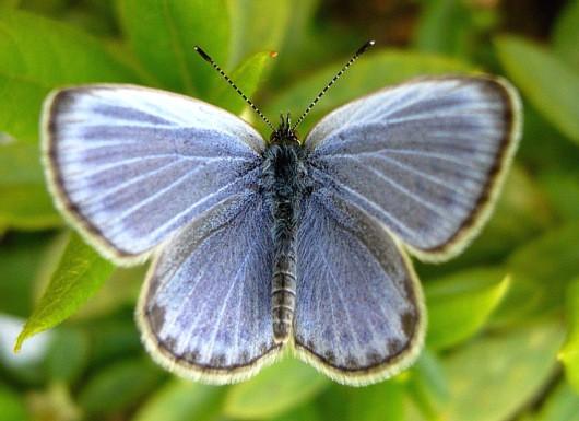 蛾もしくは蝶
