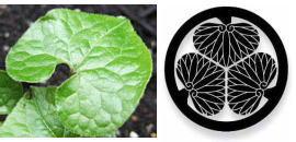 双葉葵と葵の家紋