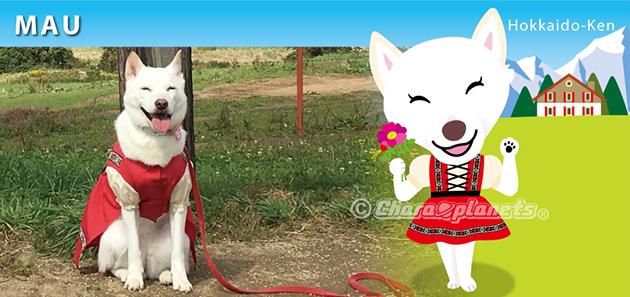 北海道犬のまぅちゃん
