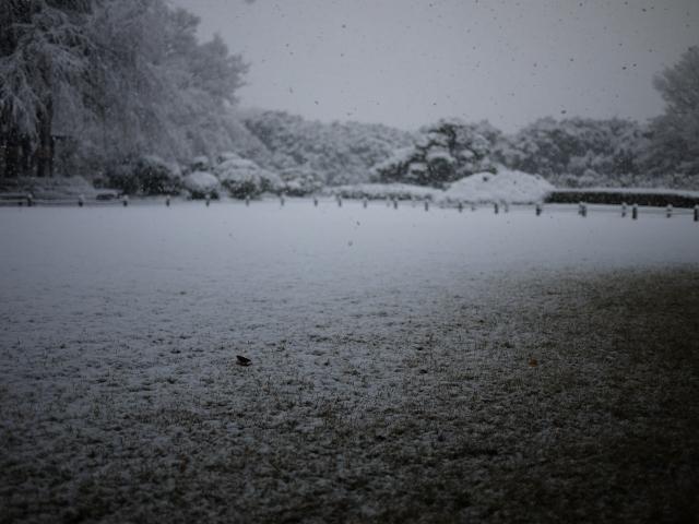 しんしんと降る雪