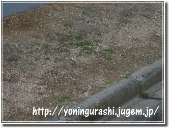yoningurashi