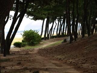 松の木ロード