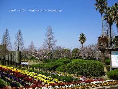 桜とやしの木