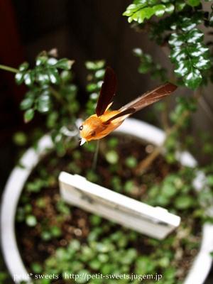 ダイダイの鳥