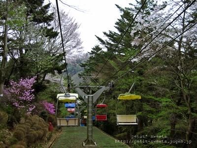 ロープウェイト桜