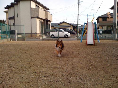 写真_110131_05.jpg