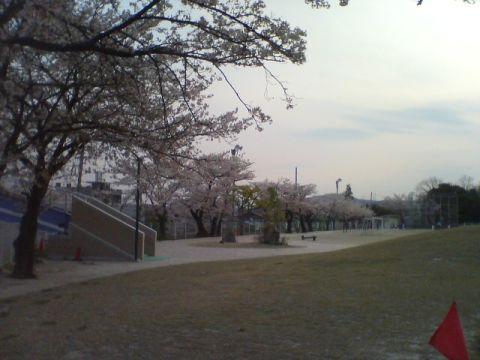 泉小学校4