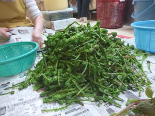 2014山 山菜1