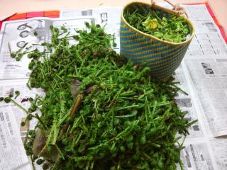 2014山 山菜2