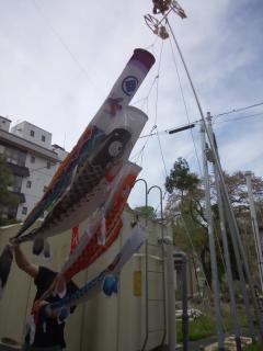 2014鯉のぼり1