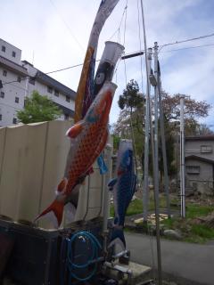 2014鯉のぼり2