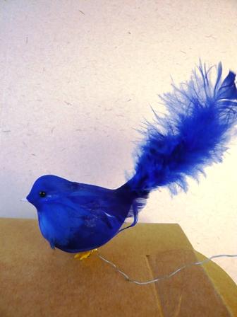青い鳥側面