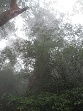 屋久島16
