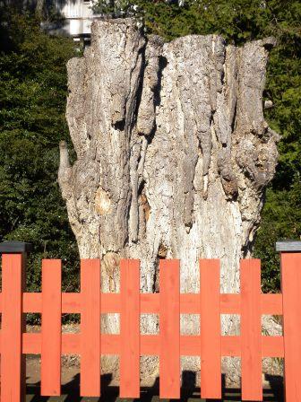 鶴岡にある木