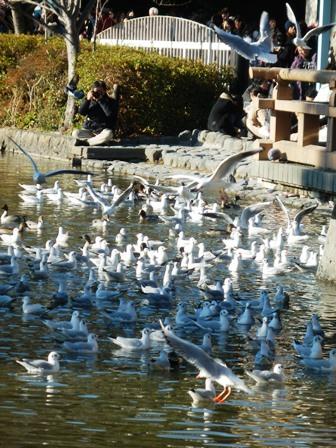 餌に群がる鳥