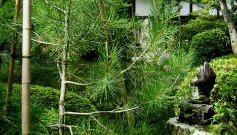 神光院のたぬき(京都)【たぬき銀行】