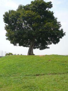 からっぽの木