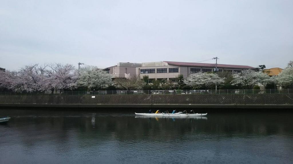 2017 お花見3