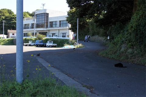 田代島1.jpg