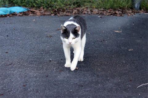 田代島猫も歩けば1-2.jpg