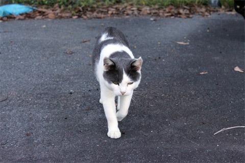 田代島猫も歩けば1-3.jpg