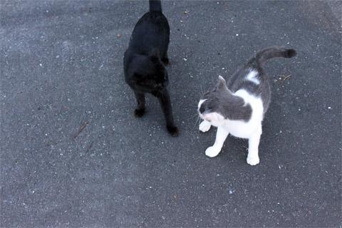 田代島猫も歩けば1-5.jpg