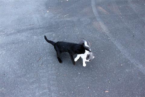 田代島猫も歩けば2-2.jpg
