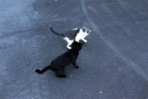 田代島猫も歩けば2-5.jpg
