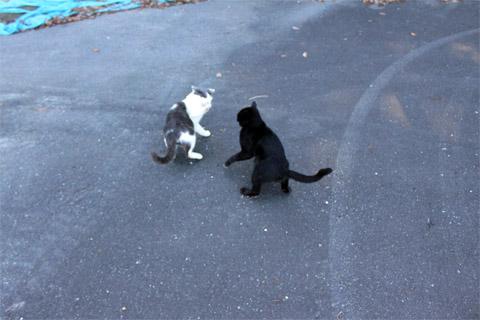 田代島猫も歩けば2-8.jpg