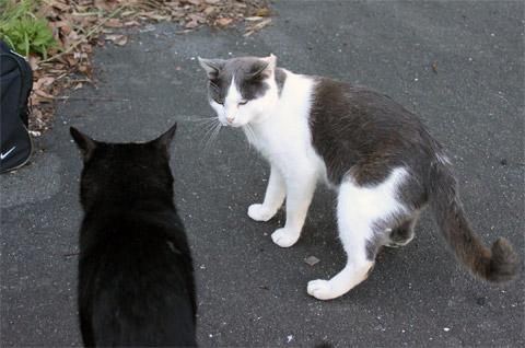 田代島猫も歩けば3-1.jpg