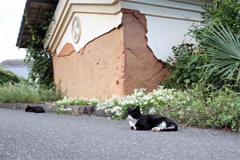 田代島32.jpg