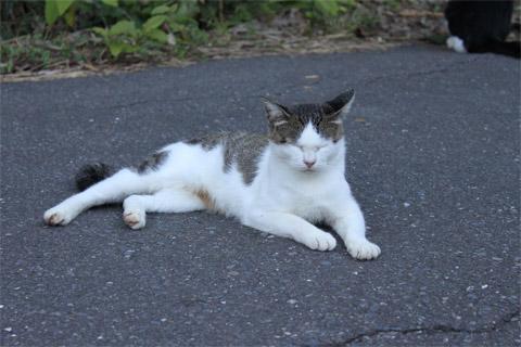 猫神社3.jpg