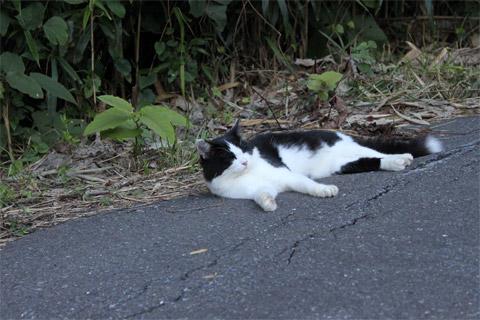 猫神社4.jpg