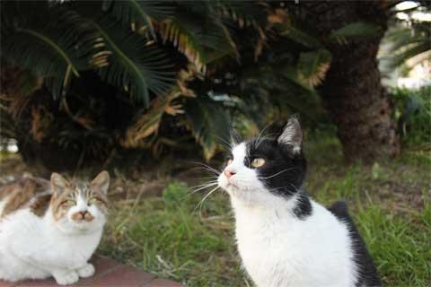 立ち猫11-1.jpg