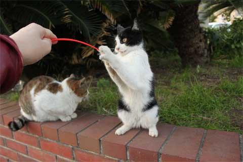 立ち猫11-2.jpg