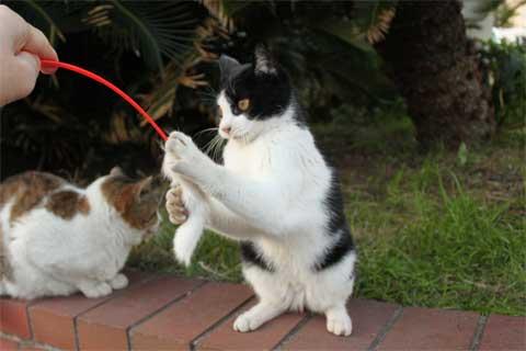 立ち猫11-3.jpg