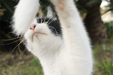 立ち猫11-4.jpg