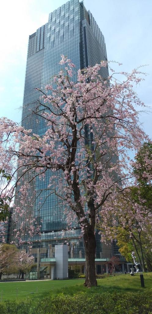 ミッドタウンの枝垂れ桜と最新のタワーマンション