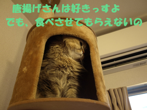 P7038840.jpg