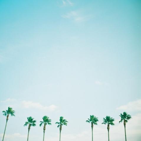 ヤシの木.jpg