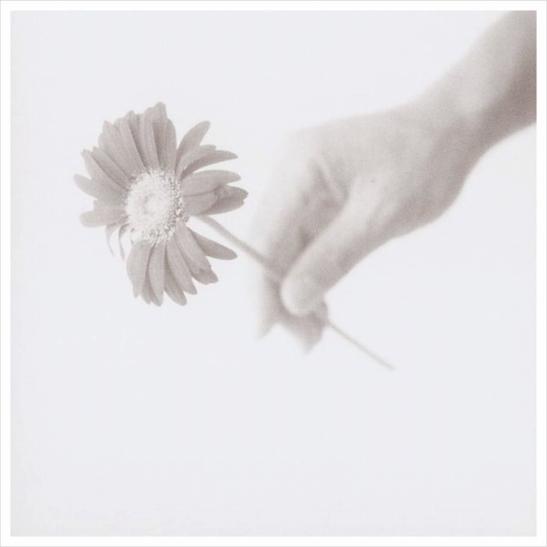flower (2).jpg
