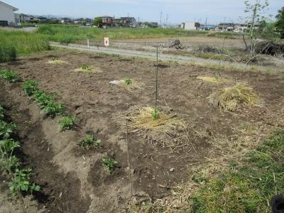 20190503家庭菜園02