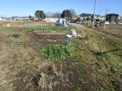 20200101家庭菜園02