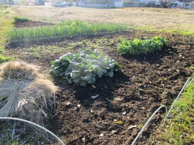 20200101家庭菜園17